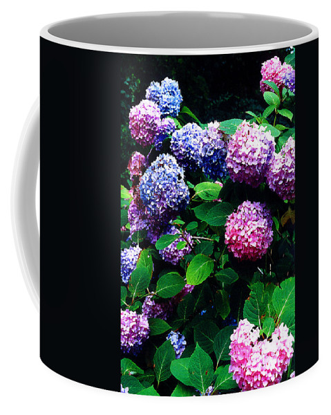 Flowers Coffee Mug featuring the photograph Hydrangeas by Nancy Mueller
