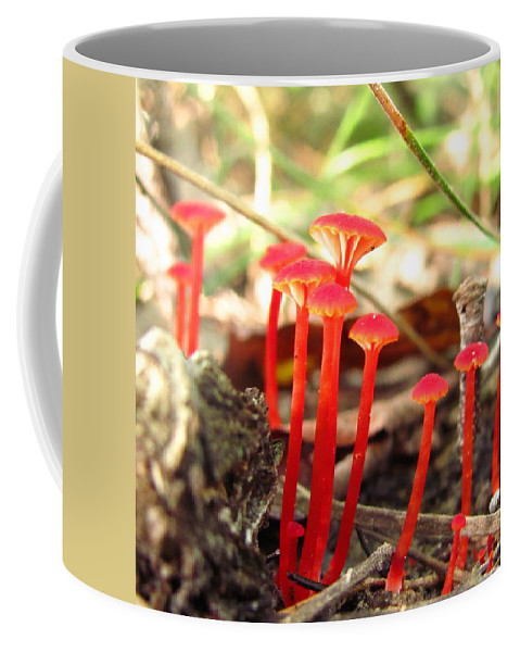 Hygrophrus Cantharellus Images Hygrophrus Cantharellus Photo Prints Red Mushroom Images Red Fungi Photo Prints Mason Neck Virginia Fungus Diversity Forest Ecosystem Ecology Biodiversity Nature Images Bright Red Mushrooms Images Coffee Mug featuring the photograph Hygrophorus Cantharellus by Joshua Bales