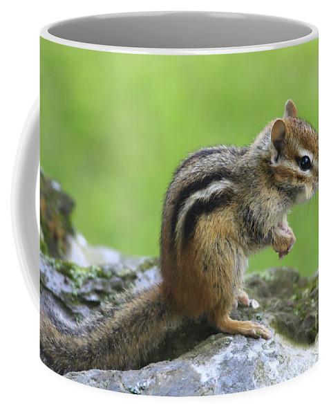 Chipmunk Coffee Mug featuring the photograph I Am Just So Cute by Deborah Benoit
