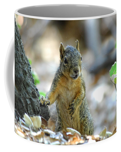 Squirrel Coffee Mug featuring the photograph I Ate Too Many Nuts by Donna Blackhall