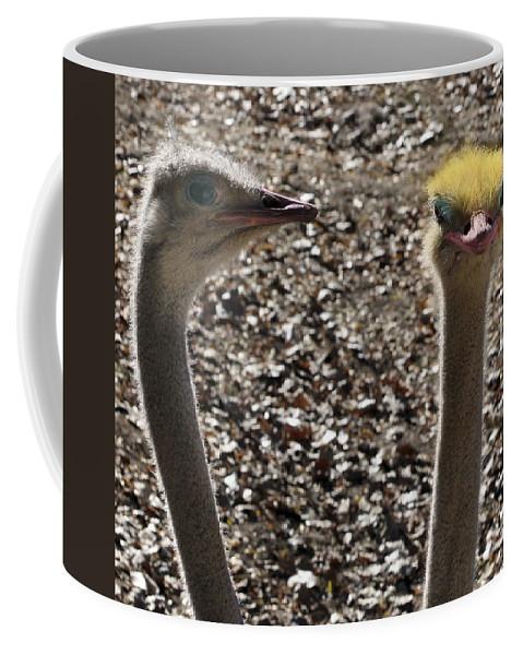 Ostrich Coffee Mug featuring the photograph I Feel Pretty by Marilyn Hunt