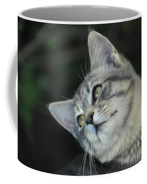 Cat Coffee Mug featuring the photograph I Know I'm Cute by Donna Blackhall