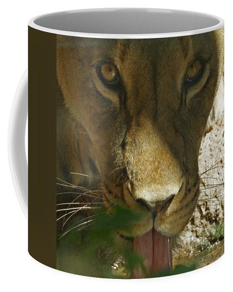 Lion Coffee Mug featuring the photograph I See You 2 by Ernie Echols