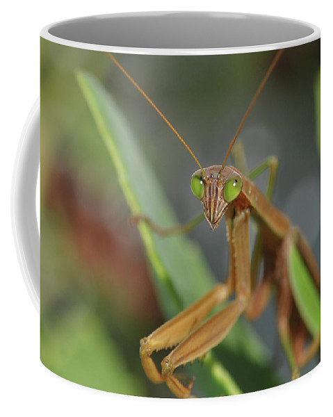 Preying Mantis Coffee Mug featuring the photograph I See You by Barbara Treaster