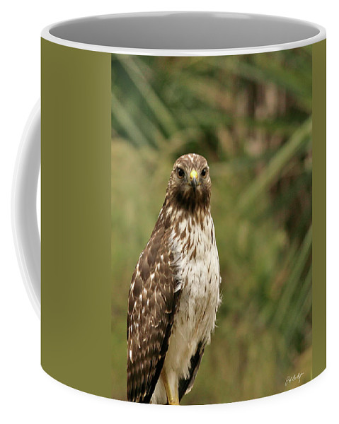 Bird Coffee Mug featuring the photograph I See You by Phill Doherty