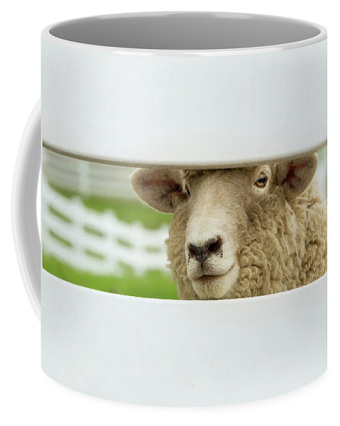 Animals Coffee Mug featuring the photograph I See You by Sue Collura