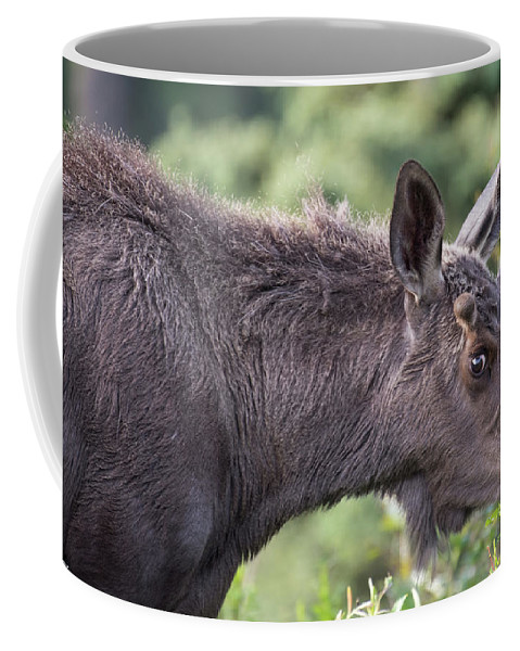 Moose Coffee Mug featuring the photograph I See You Too by David Taylor