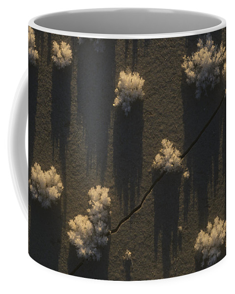 Nobody Coffee Mug featuring the photograph Ice Crystals Form On Overflow by Michael S. Quinton