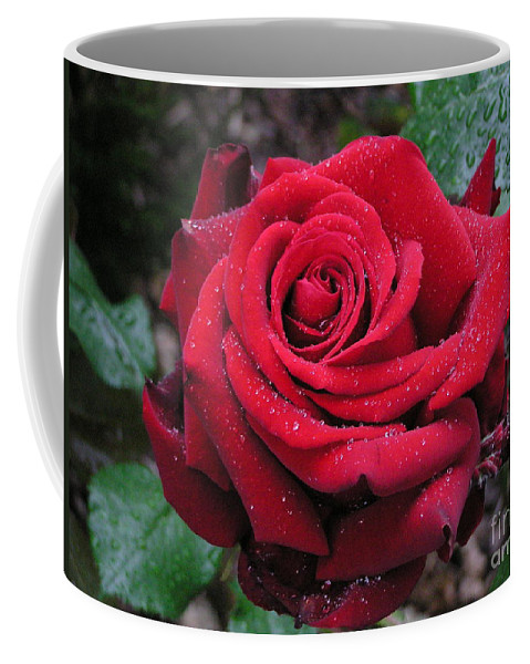 Rose Coffee Mug featuring the photograph Icy Rose by Louise Magno