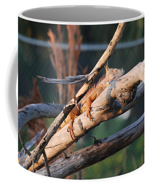 Branches Coffee Mug featuring the photograph Igauna On A Stick by Rob Hans