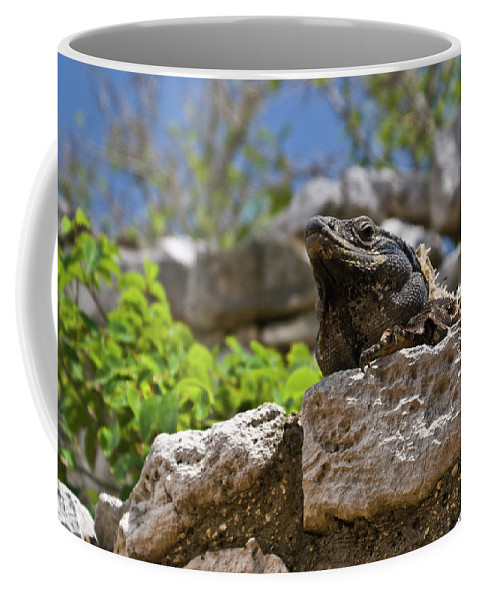 Reptile Coffee Mug featuring the photograph Iguana At Talum Ruins Mexico by Douglas Barnett