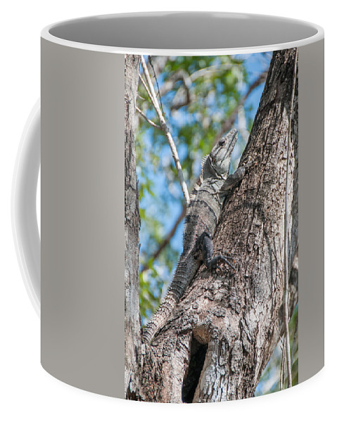 Mexico Quintana Roo Coffee Mug featuring the digital art Iguana At The Coba Ruins by Carol Ailles