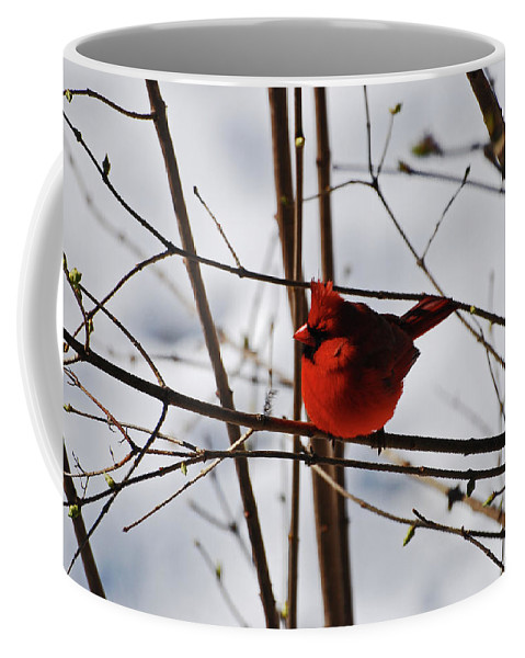 Cardinal Coffee Mug featuring the photograph I'm Feeling Rather Red Today by Lori Tambakis