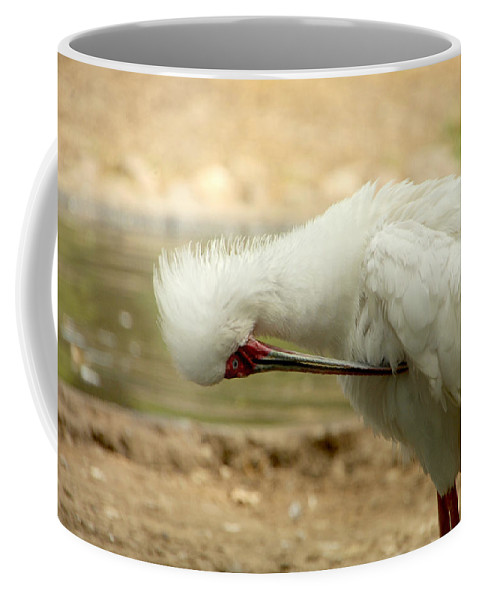 Bird Coffee Mug featuring the photograph I'm So Ashamed by Donna Blackhall