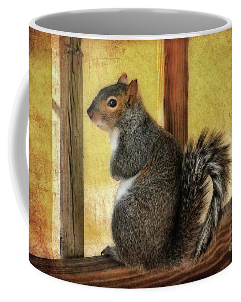 Squirrel Coffee Mug featuring the photograph I'm Sorry by Lois Bryan