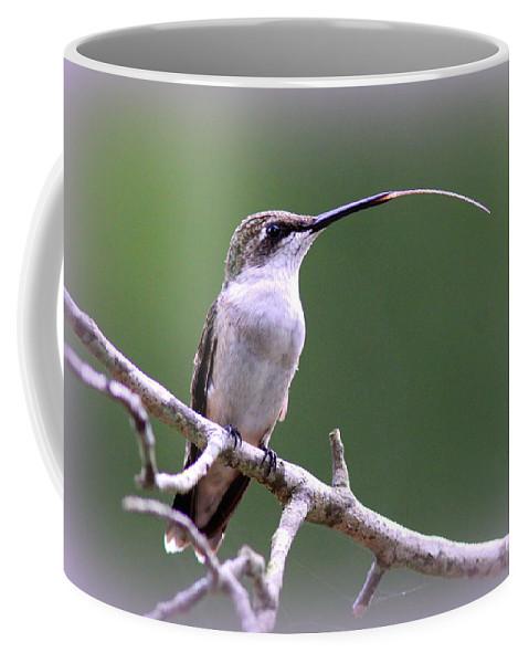 Ruby-throated Hummingbird Coffee Mug featuring the photograph Img_1768-001 - Ruby-throated Hummingbird by Travis Truelove