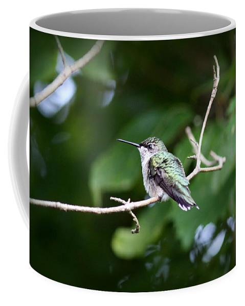 Ruby-throated Hummingbird Coffee Mug featuring the photograph Img_3309 - Ruby-throated Hummingbird by Travis Truelove