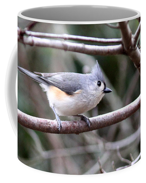 Tufted Titmouse Coffee Mug featuring the photograph Img_4672 - Tufted Titmouse by Travis Truelove