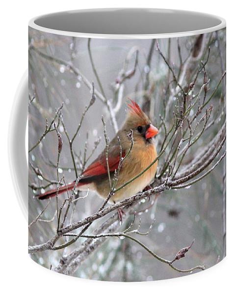 Northern Cardinal Coffee Mug featuring the photograph Img_6770 - Northern Cardinal by Travis Truelove