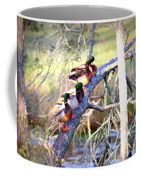 Mallard Coffee Mug featuring the photograph Img_8884-002 - Mallard by Travis Truelove