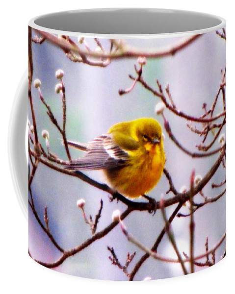 Pine Warbler Coffee Mug featuring the photograph Img_9900 - Pine Warbler by Travis Truelove