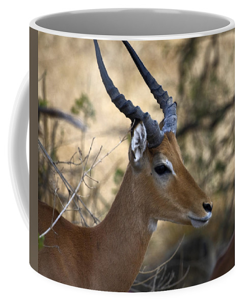 Impala Coffee Mug featuring the photograph Impala Portrait by Sally Weigand