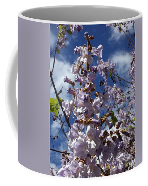 Imperial Tree Coffee Mug featuring the photograph Imperial Tree Flowers by Augustus Gallia