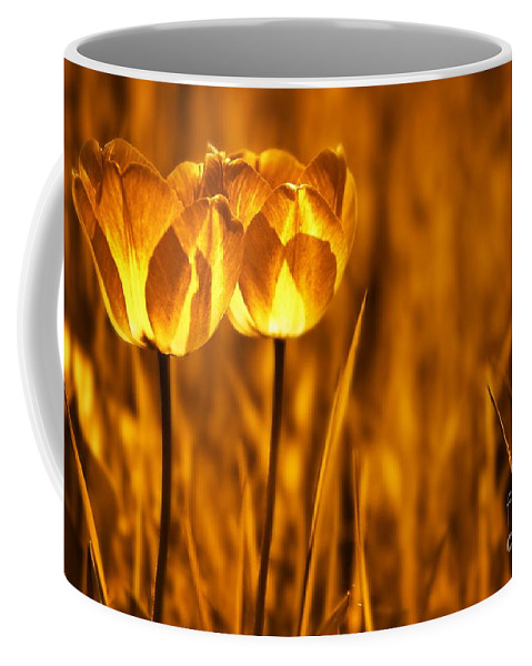 Tulips Coffee Mug featuring the photograph In A Perfect World by Jacky Gerritsen