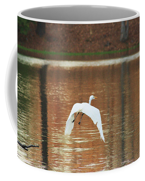 Heron Photograpy Coffee Mug featuring the photograph In Flight by Kim Henderson