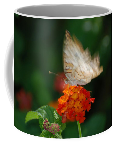 Butterfly Coffee Mug featuring the photograph In Living Color by Rob Hans