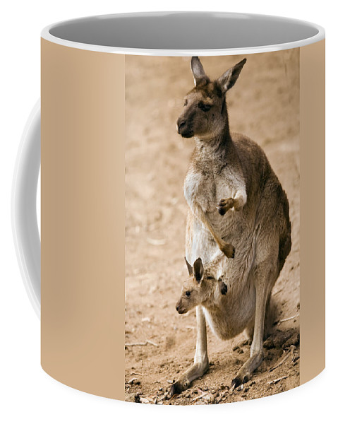 Kangaroo Coffee Mug featuring the photograph In Mother's Care by Mike Dawson