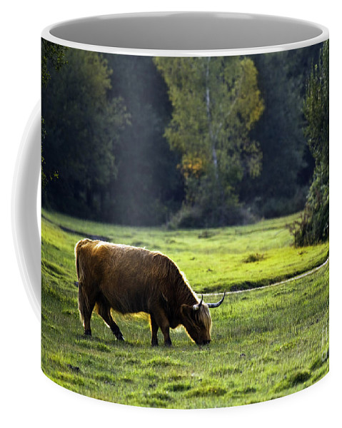 Heilan Coo Coffee Mug featuring the photograph in New Forest by Angel Tarantella
