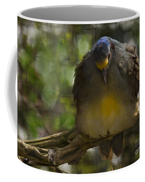 Zoo Coffee Mug featuring the photograph In The Captivity by Angel Ciesniarska