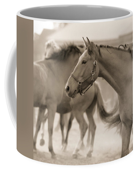 Horses Coffee Mug featuring the photograph In The Dust by Angel Ciesniarska