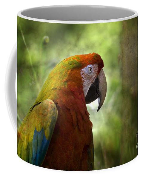 Garden Coffee Mug featuring the photograph In The Garden by Angel Ciesniarska