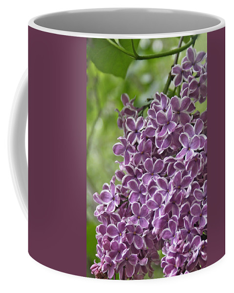 Purple Coffee Mug featuring the photograph In The Garden. Lilac by Ben and Raisa Gertsberg