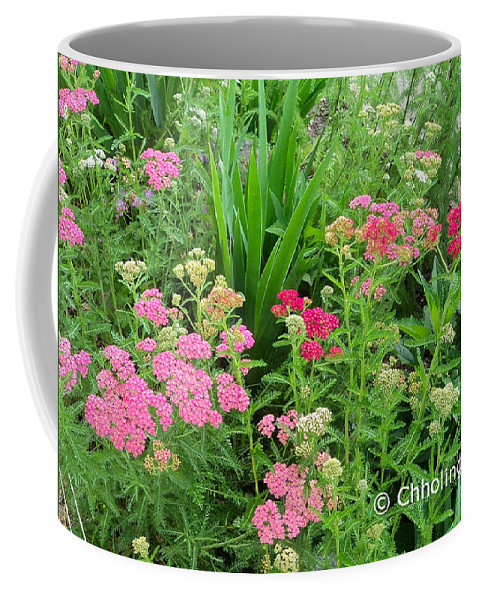 Yarrow Coffee Mug featuring the photograph In The Garden - Yarrow by Chholing Taha