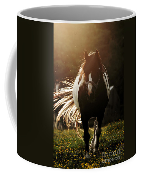 Horse Coffee Mug featuring the photograph In The Last Rays Of Setting Sun by Angel Ciesniarska