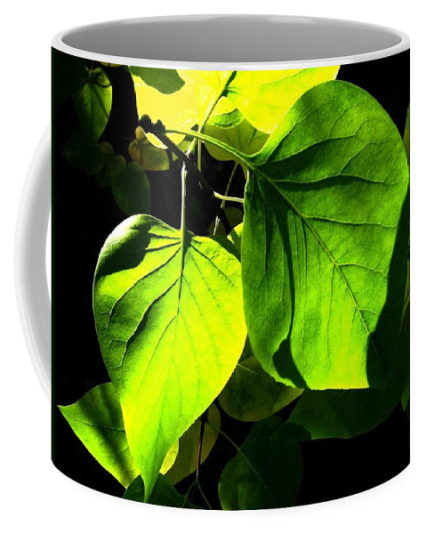 Lilac Leaves Coffee Mug featuring the photograph In The Limelight by Will Borden