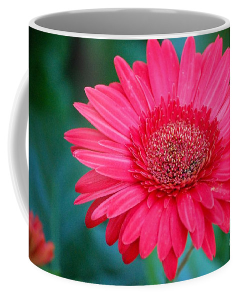 Gerber Daisy Coffee Mug featuring the photograph In The Pink by Debbi Granruth