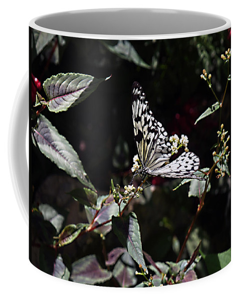 Butterfly Coffee Mug featuring the photograph In The Shadows by Bob Johnson