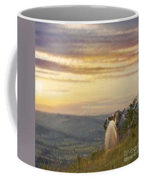Long Mynd Hill Coffee Mug featuring the photograph In The Warm Evening Sunlight by Angel Ciesniarska
