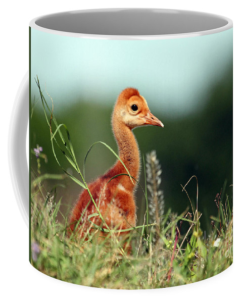 Baby Sandhill Crane Coffee Mug featuring the photograph In The Weeds by Davids Digits