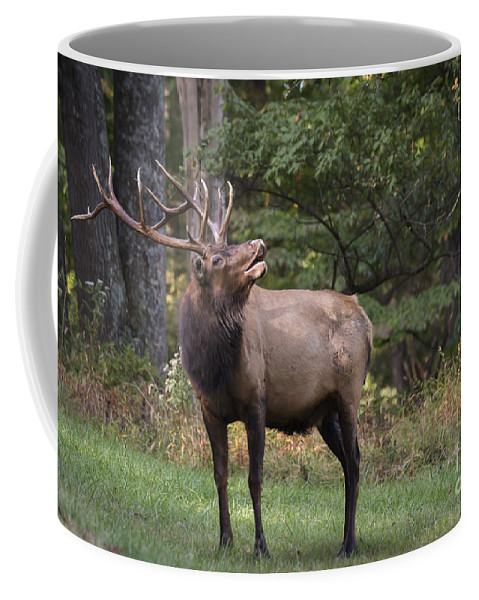 Bull Coffee Mug featuring the photograph In The Air by Andrea Silies