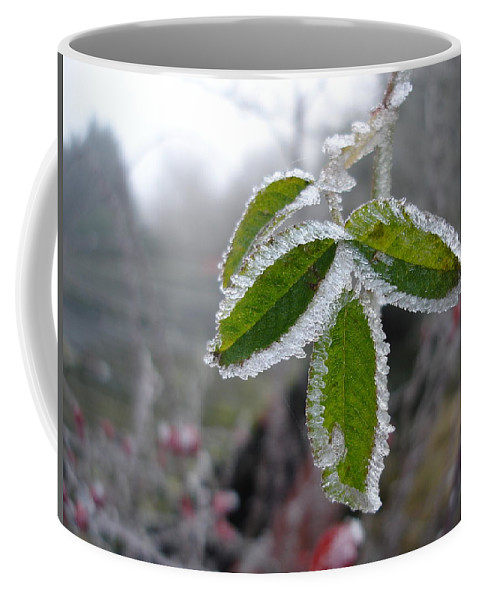 Winter Coffee Mug featuring the photograph In The Winter Sunlight by Susan Baker