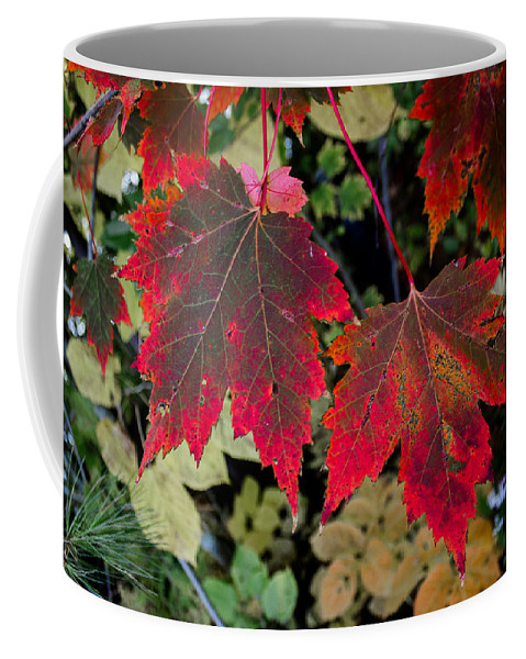 Maple Coffee Mug featuring the photograph In Transition by Tim Kirchoff