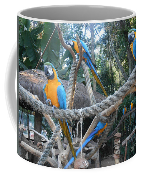 Blue And Yellow Macaw Coffee Mug featuring the photograph Incredible Sight by Silvana Miroslava Albano