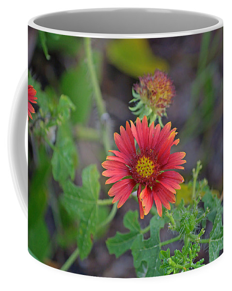 Flower Coffee Mug featuring the photograph Indian Blanket Flower by Kenneth Albin
