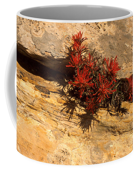 Indian Paint Brush Coffee Mug featuring the photograph Indian Paint Brush by Jerry McElroy