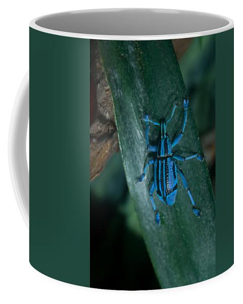 Weevil Coffee Mug featuring the photograph Indigo Blue Weevil by Douglas Barnett